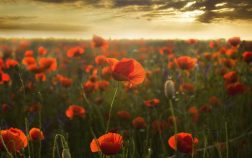 Remembrance Day Feature